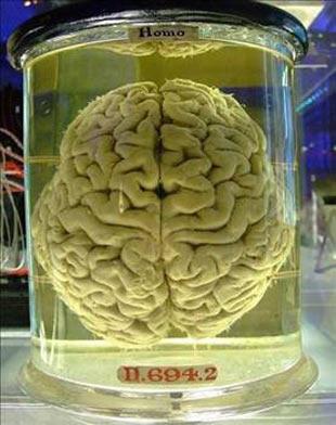 İnsan beyninin duyulmayan sırları