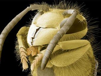 Böcek vesikalıkları