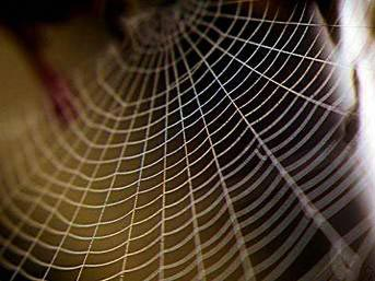 Örümcekler kendi ağlarına neden yakalanmaz?