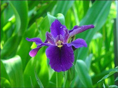 Cinsel gücü artıran 18 bitki