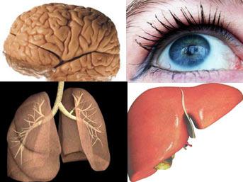 Organlar ne zaman yaşlanıyor? Organlar