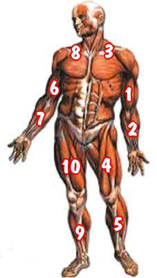 Organlar ne zaman yaşlanıyor? Organlar13