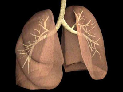 Organlar ne zaman yaşlanıyor? Organlar4