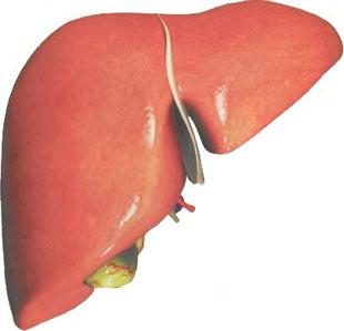Organlar ne zaman yaşlanıyor? Organlar8