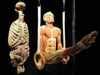 Gerçek insan bedenleri sergide