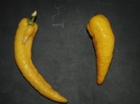 Biber şeklindeki limon görenleri şaşırtıyor Limon-biber