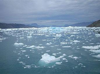 16)  Buzun su yüzeyinde kalmasının suda yaşayan canlılar için önemi nedir?