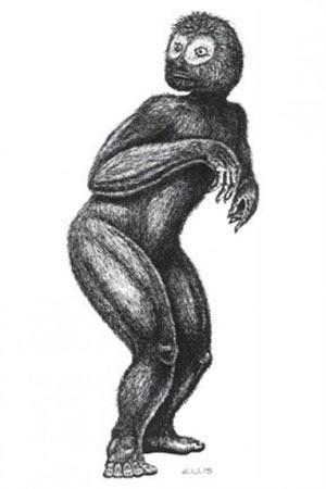 Kokarca Maymun / Florida