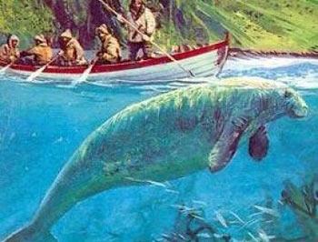 Steller Deniz Canavarı / Rusya