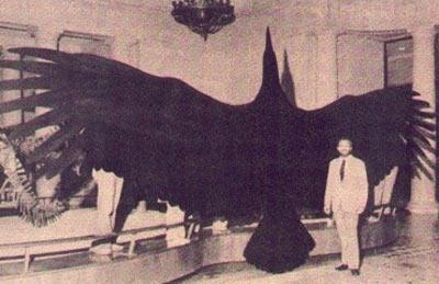 Thunderbird / Kuzey Amerika