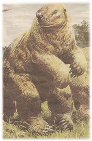 Dev Sloth / Güney Amerika