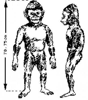 Orang Pendak / Sumatra ve Borneo