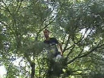 Eşi evi terk edince ağaca çıktı