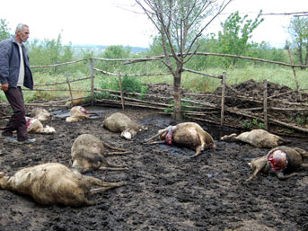 Simav'da kurt saldırısı