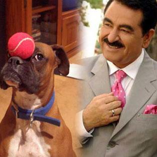 Köpekleri tanıdıkça insanları..